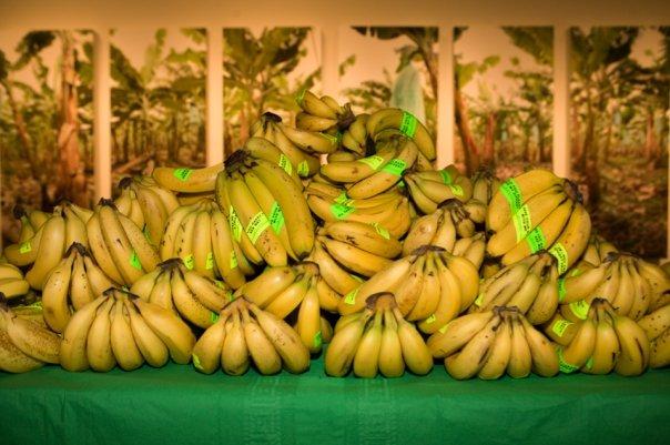 banana_pile_opening